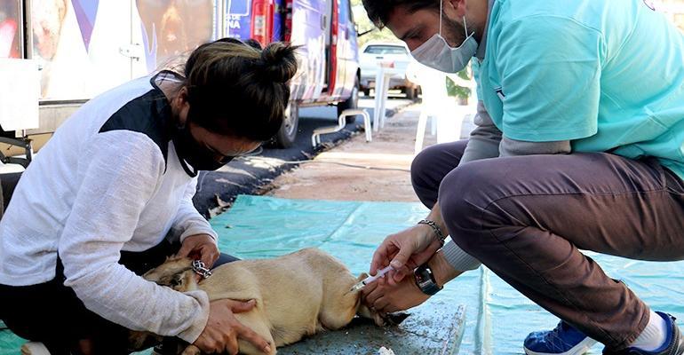 LONDRINA - Programa Castramóvel ultrapassa 12 mil castrações em cães e gatos