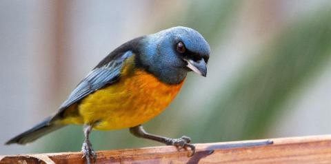 Com mais de 400 espécies de aves, Norte Pioneiro tem potencial turístico para atrair observadores