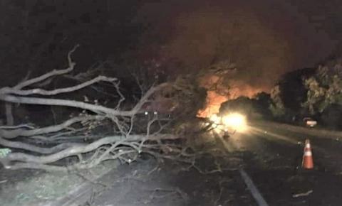 Motociclista morre ao bater contra árvore que caiu na BR-369 em Bandeirantes