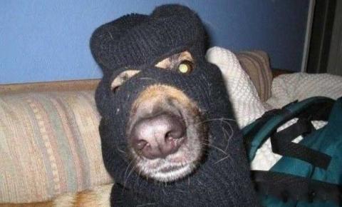 Cachorro participa de furto à loja de celulares com mais três comparsas