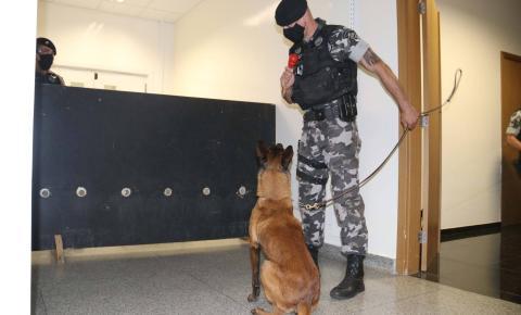 Polícia Científica e PM treinam cães de faro para encontrar novas drogas