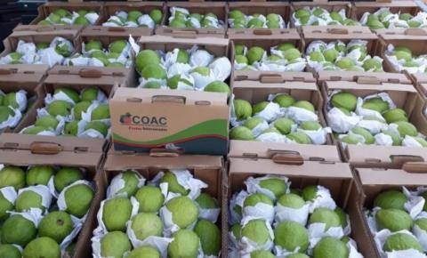 Portugal firma acordo para importar goiabas brasileiras