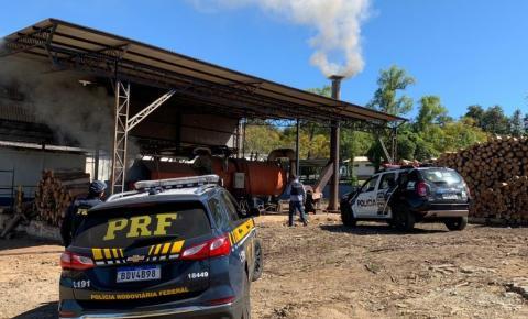 PRF e Polícia Civil incineram 250 quilos de maconha em Santo Antônio da Platina