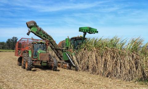 Com tecnologia e produtividade, cana-de-açúcar volta a brilhar no Norte Pioneiro