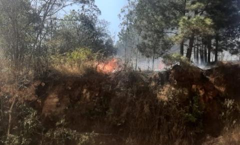 Incêndios com vestígios criminosos colocam em risco a vida de moradores e danificam beleza natural do Parque Mina Velha